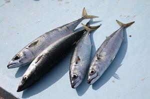 cassis fish